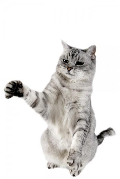 Boala zgirieturii de pisica