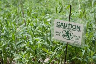 Intoxicatia cu pesticide organo-fosforate