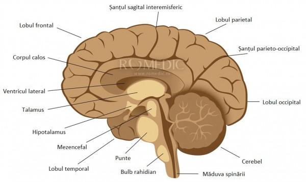 Sindromul cerebelos (atrofia cerebeloasă)