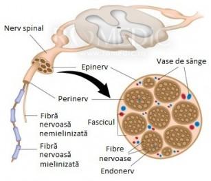 polineuropatie și dureri articulare