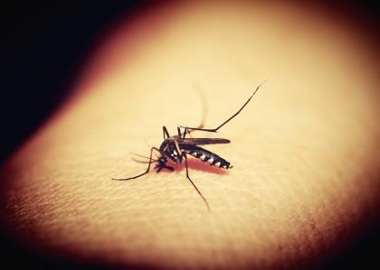 Infecția cu virusul West Nile