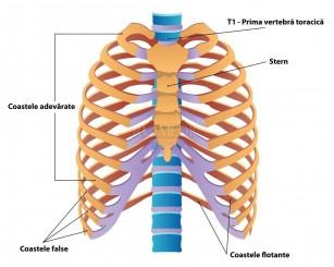 tratamentul artrozei sternului