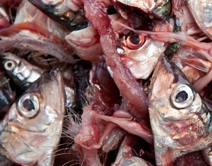 Trimetilaminuria (TMAU sau Sdr. Mirosului de pește sau PATM)