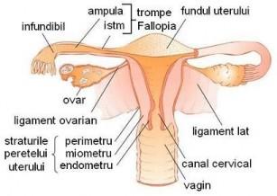 Aparatul reproducator feminin