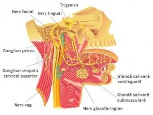 Nevralgia nervului glosofaringian