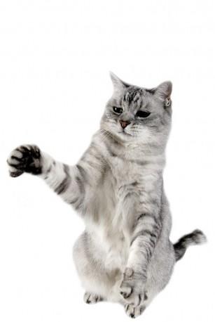 Boala zgarieturii de pisica