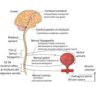 Vezica neurogena