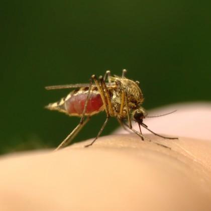 Intepaturi de insecte - primul ajutor