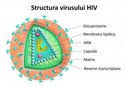 S-a reușit eliminarea virusului HIV din culturi de celule umane pentru prima oară