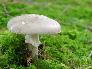 Compostul de ciuperci cu vitamina E suprimă tumorile maligne în cancerul de prostată