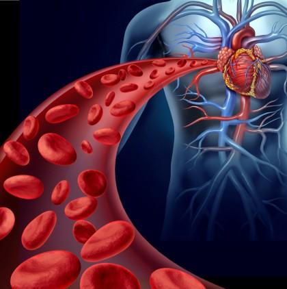 Efectele stresului asupra sănătății inimii sunt diferite la femei și bărbați