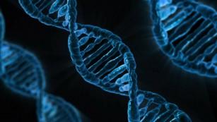 Noi litere adăugate la alfabetul ADN-ului
