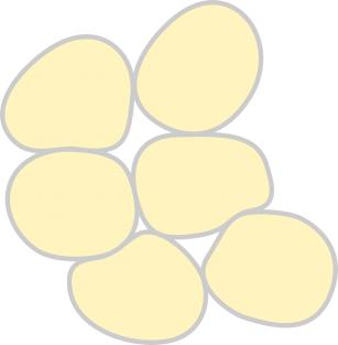 Studiu: Adipocitele de sub piele ne-ar putea proteja împotriva infecțiilor