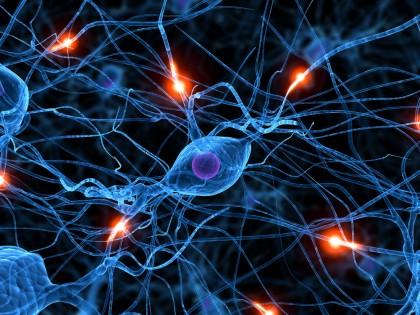 Celulele pielii transformate de oamenii de știință  în neuroni