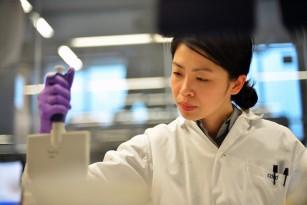 O nouă metodă de regenerare a celulelor care produc insulina