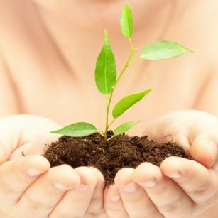 Au fost identificate 6 substanțe naturale care ar putea încetini îmbătrânirea