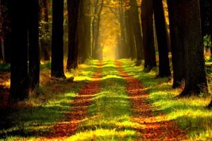 Privirea copacilor poate scădea nivelul de stres, chiar dacă te afli în oraș