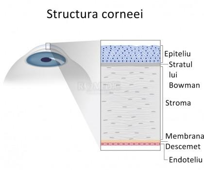 Corneea dezvoltată din propriile celule ar putea fi o soluție la deficiențele de vedere
