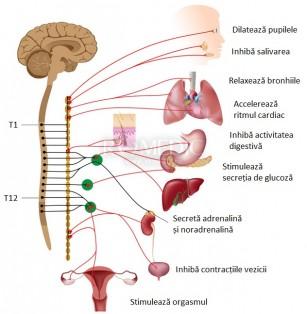 Informații noi despre modul în care mintea ne influențează corpul