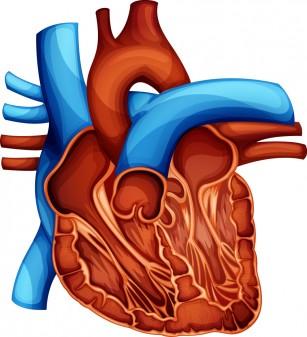 Pietrele la fiere pot crește cu o cincime riscul apariției bolilor de inimă