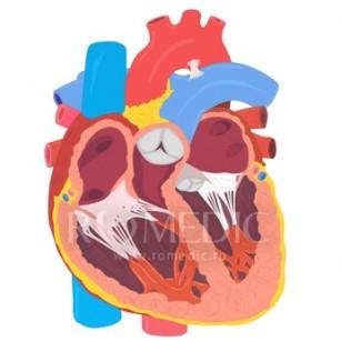 Valvele cardiace sintetice, invenția care ajută chirurgii să-și exerseze tehnica