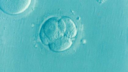 Pe viitor ovulele ar putea să nu fie necesare pentru conceperea unui copil