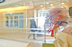 Bâlbâiala a fost asociată cu fluxul sanguin redus în zona limbajului din creier