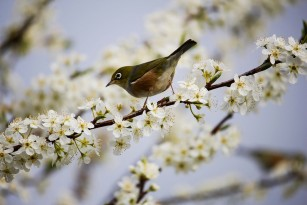 Starea de bine asociată cu locuitul în cartiere înverzite, cu multe păsări