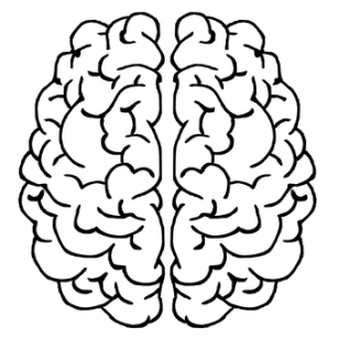 Cum vede creierul obiectele 3D?