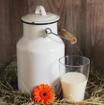 Laptele crud  versus laptele pasteurizat: un risc de 840 de ori mai mare de îmbolnăvire