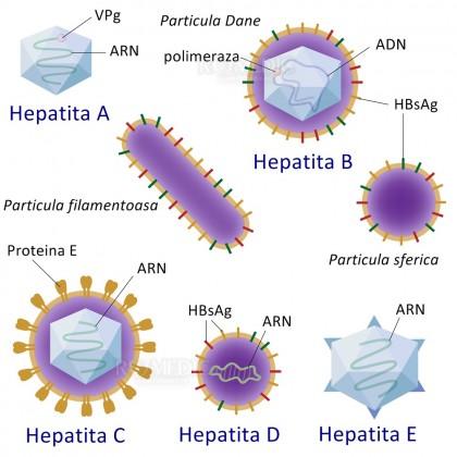 Similarități și diferențe între hepatitele A, B, C, D și E