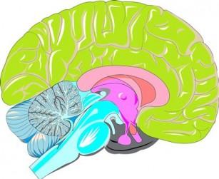 Neuronii care dictează instalarea anxietății