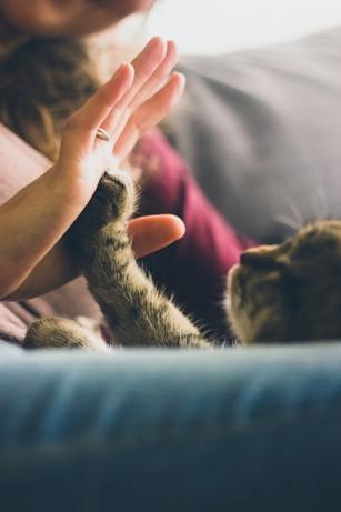 Animalele de companie pot îmbunătăți sănătatea mentală