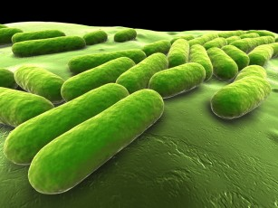 Transplantul fecal are o rată de succes de 90% în infecțiile bacteriene