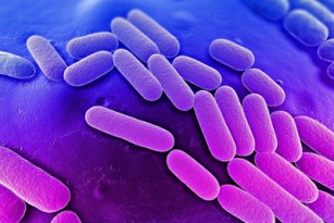 Un posibil tratament cu anticorpi pentru infecțiile cu K. pneumoniae multirezistentă