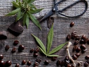 Cum modulează cafeaua metabolismul canabinoid și efectele asupra sănătății