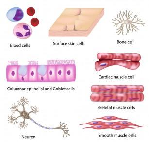 De ce unele celule, deși au gene identice, acționează diferit?