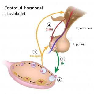 Deficiența de zinc poate afecta în mod negativ fertilitatea