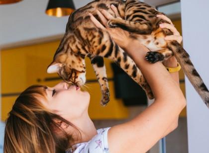 Ai o pisică în casă? Riscuri și precauții