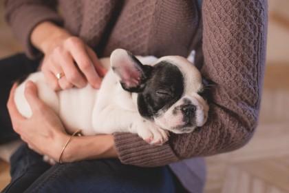 Boli pe care le putem lua de la animalele de companie