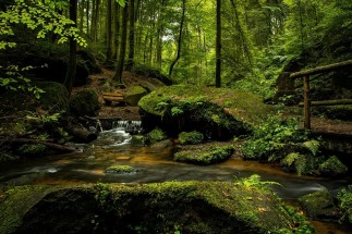 Putem bea apă din izvoarele din pădure?