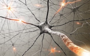 Ce sunt neurotransmițătorii?
