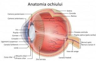 O nouă terapie poate opri pierderea progresivă a vederii