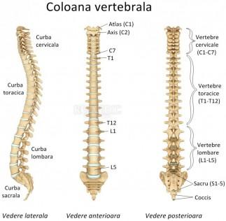 Care este diferenţa dintre hernia de disc şi protruzia discală?