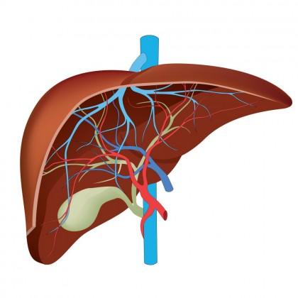 Encefalopatia hepatica (Encefalopatia porto-sistemica)