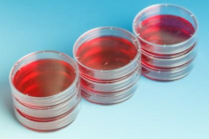 Primele vase de sânge complet umane crescute în laborator