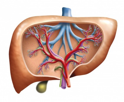 Hepatomegalia (Hipertrofia hepatica)