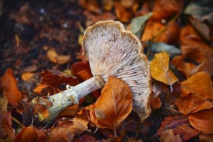 Consumul de ciuperci, asociat cu un risc diminuat pentru cancerul de prostată