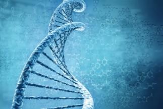 Cercetătorii au creat un genom 3D