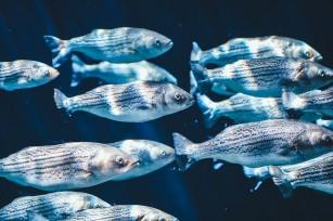 Mercurul din pește